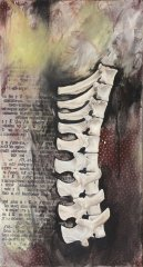 untitled-vertebrae.jpg